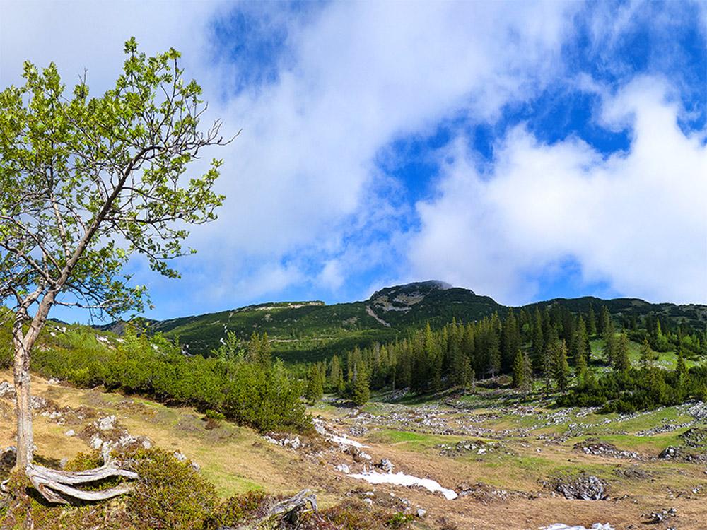 Alpenlandschaft mit Fichtenbestand mit latschenbewachsenen Hängen.