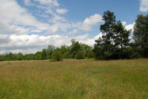 Von Wald gesäumte Heidelandschaft.