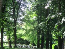 Eine Gruppe von Grabsteinen ist umgeben von zahlreichen hochgewachsenen Buchen.