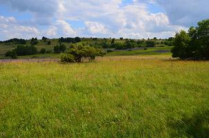 Rhönlandschaft mit Wiese vor mit Büschen bewachsenen Hügeln.