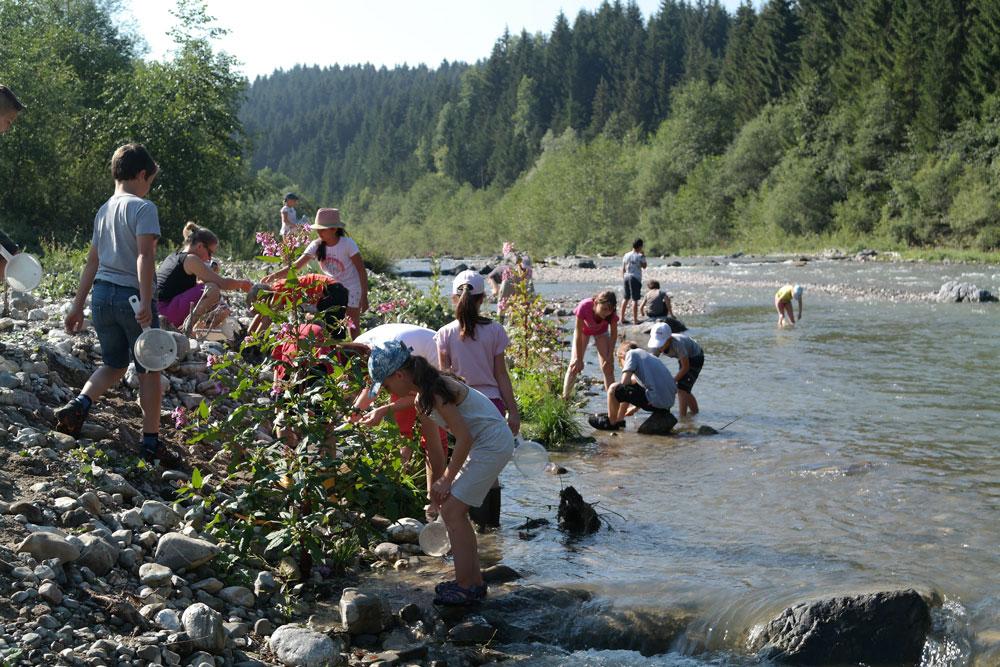 Umgeben von Fichtenwäldern und einer schmalen Weichholzaue aus Weiden, fließt der Halblech mit geringem Gefälle talwärts. Die Ufer sind von groben, durch den Transport im Wasser rund geschliffenen Steinen gesäumt und auch das Bachbett ist steinig und durch grobe Steinblöcke strukturiert. Im flachen Gewässer und am Ufer tummeln sich Mädchen und Jungen ausgestattet mit Sieben: Sie untersuchen die Wasserlebewesen, die zwischen den großen Kieseln und Steinen des eiskalten Gebirgsbachs leben.