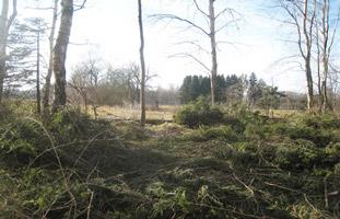 Ausschnitt eines lichten Waldes mit zahlreichen am Boden liegenden Fichtenästen.