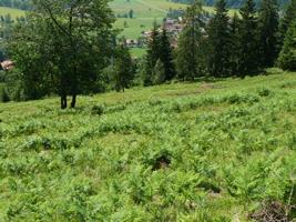 Hügelige Almwiesen mit einzelnen Fichten vor bewaldeter Bergkette.