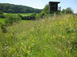 Bunte Wiese mit hoch gewachsenen Wildstauden und -blumen, im Hintergrund ein Jägerhochsitz.