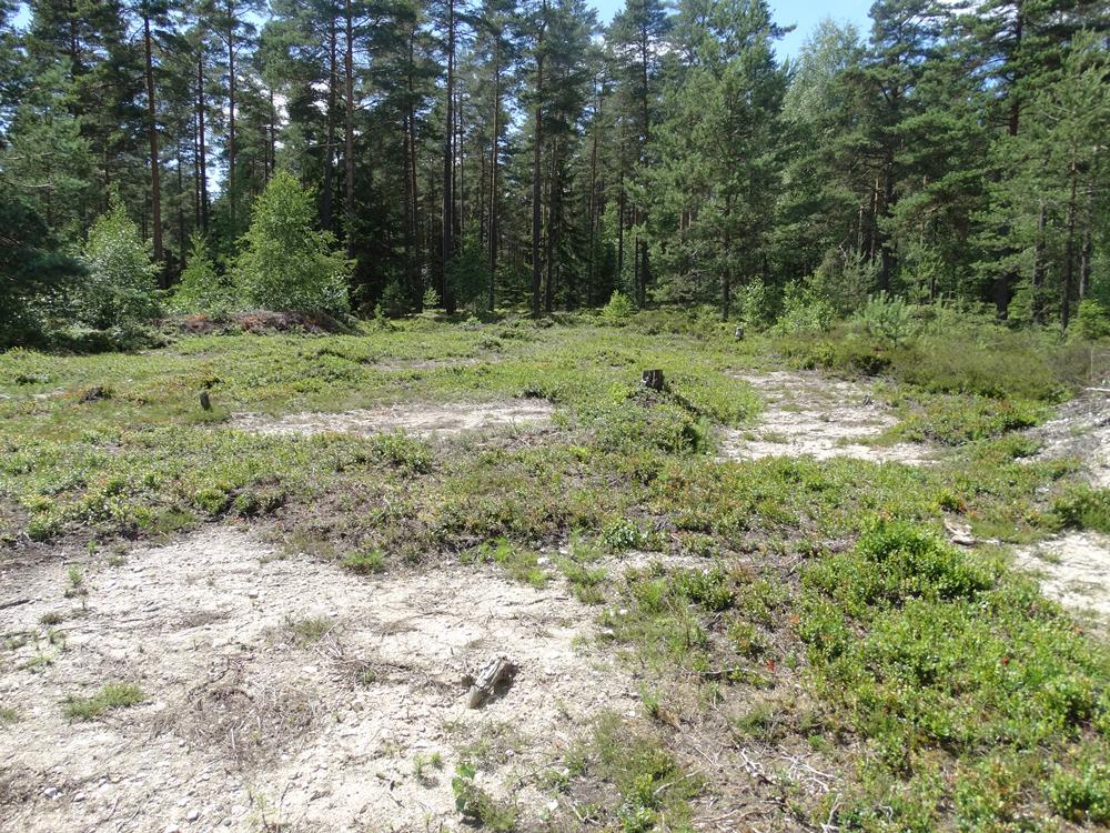 Waldlichtung mit sandigen Freiflächen und einer lückigen, krautreichen Vegetation.