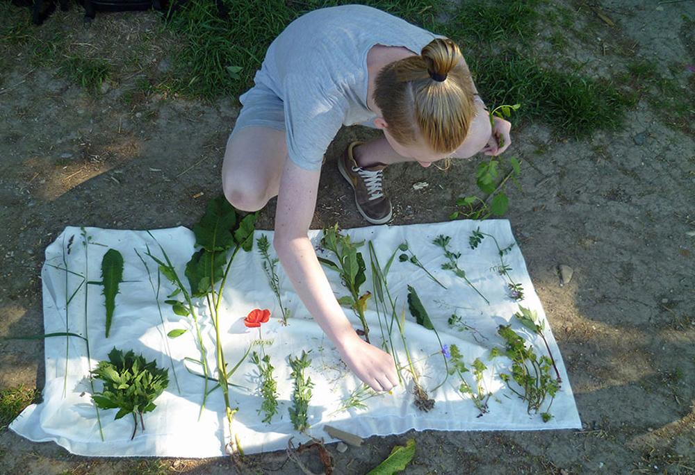 Ein Schüler kniet am Boden und breitet verschiedene Ackerwildkräuter auf einem weißen Tuch vor sich aus.
