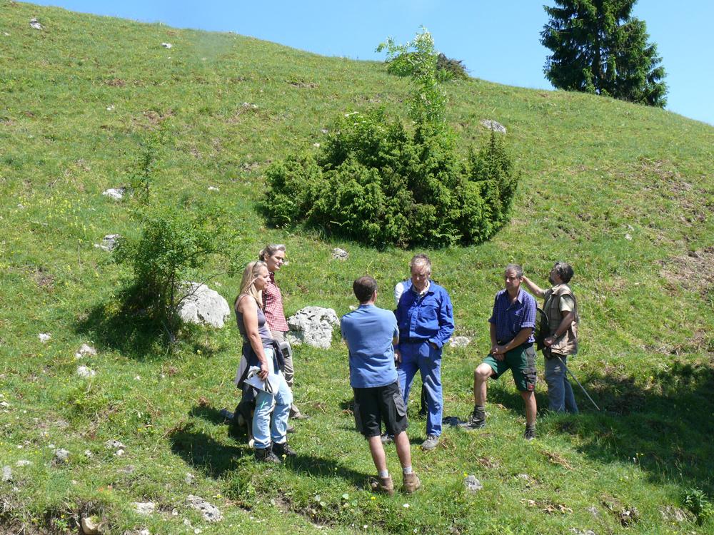 Auf einer mit niedrigen Büschen bestandenen Almwiese diskutiert eine Gruppe von Experten über die künftige Bewirtschaftung der Fläche.