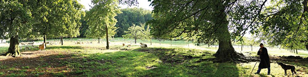Ein Schäfer mit Schäferhund steht auf seinen Stab gestützt vor einer Weidelandschaft mit vereinzelten alten Bäumen.