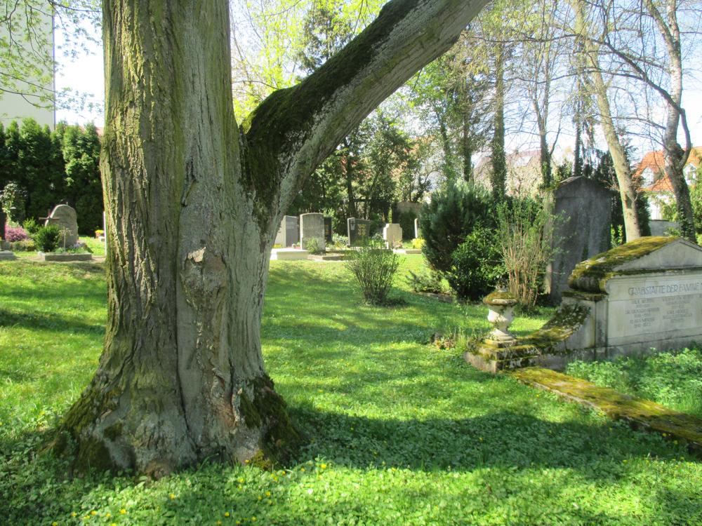Stammbereich eines alten Baumes neben zahlreichen Gräbern.