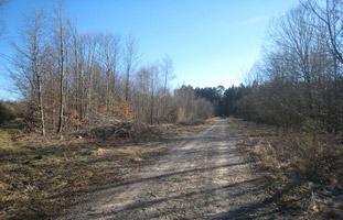 Eine breite Sandstraße, gesäumt von laublosen Bäumen, führt unter strahlend blauem Himmel auf einen Wald zu.
