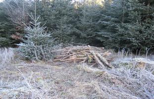 Ein Stapel aus morschen Ästen liegt am Waldrand im welken Gras auf einer mit Raureif bedeckten Wiese.