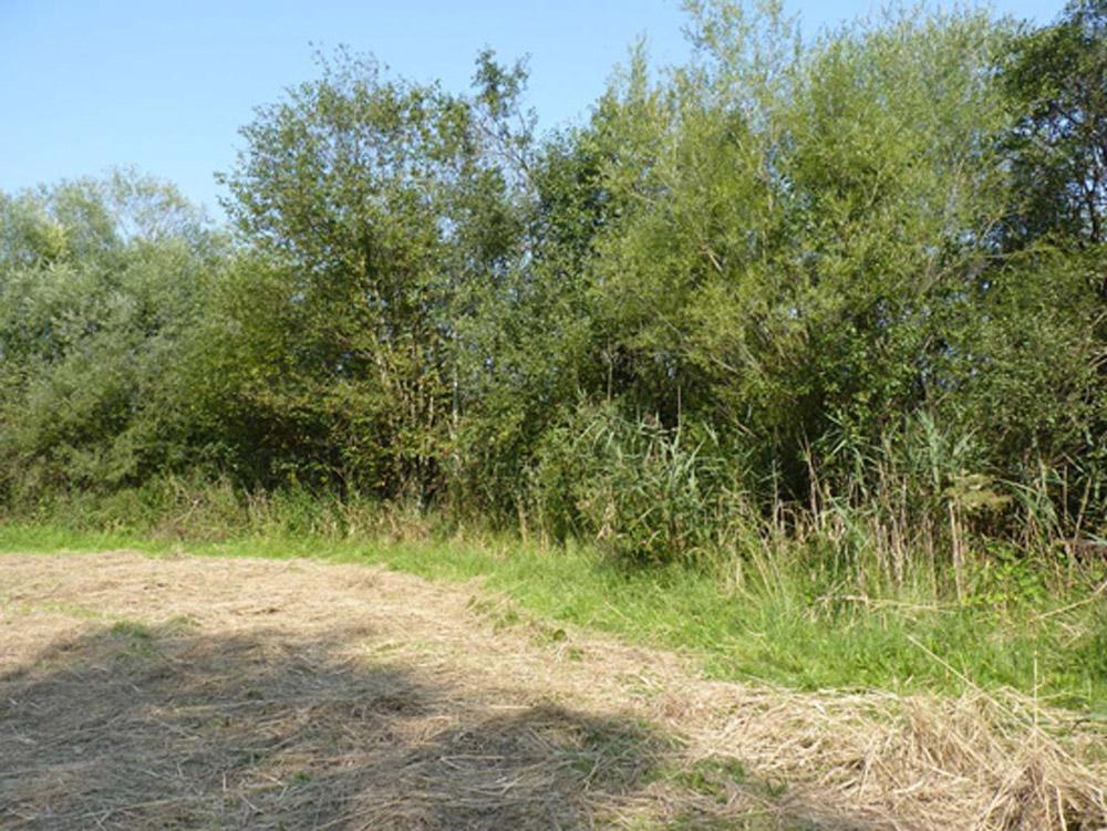 Eine mit trockenem Gras bedeckte Wiese grenzt an einen Wald.