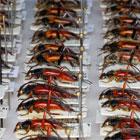 Käfersammlung im Museum