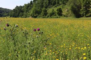 Blumenbunte Blühfläche