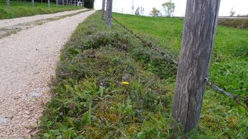 Saumstreifen zwischen Feldweg und Weide
