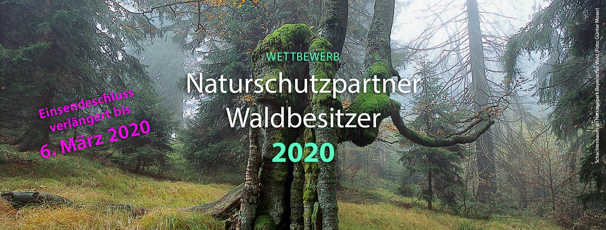 Schachtenbaum in nebeliger Waldstimmung.