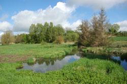 Gehölzreiche Wiesenlandschaft mit durch Biber aufgestauter Wasserfläche. Randlich eine Gruppe abgestorbener Fichten.