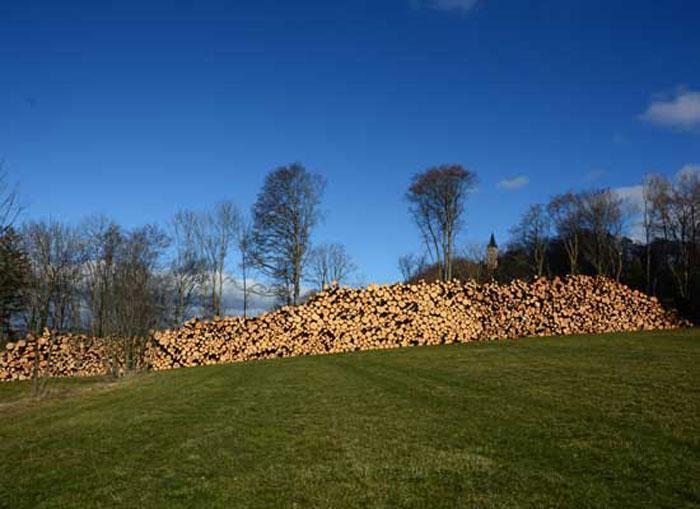 Am Rand einer Wiese liegt ein 100 m langer Holzstapel. Dahinter ein aufgelichteter Waldrand mit einzelnen Buchen.