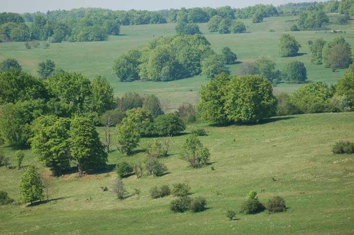Grünland-Landschaft mit eingestreuten Einzelbäumen und Gebüschen.