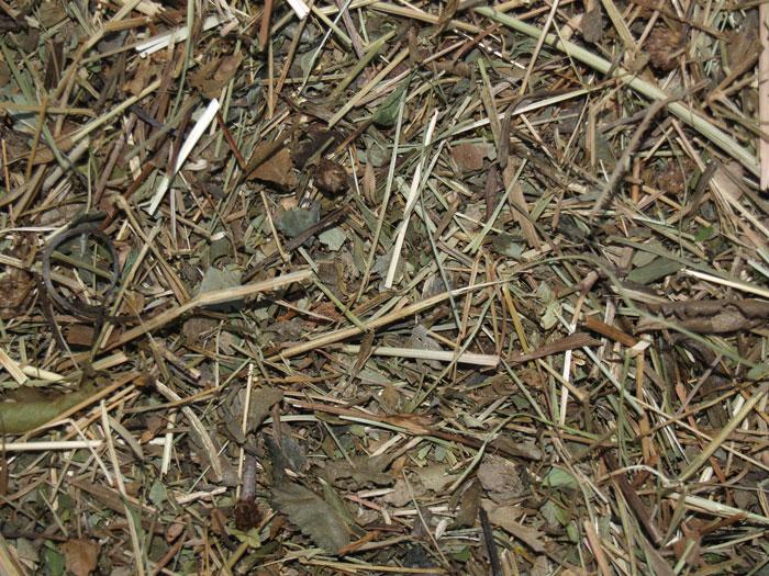 Detailansicht auf ein Druschgut. Optisch dominierend sind Stängel- und Blattreste.