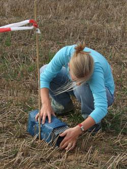 Eine Frau installiert bei Würzburg eine Lebendfalle auf einem abgeernteten Getreidefeld.
