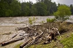 Hochwasser an der Iller mit Treibgutsaum vor einzelnen Gebüschen am Ufer. Im Hintergrund der Fluss vor einem Waldrand.