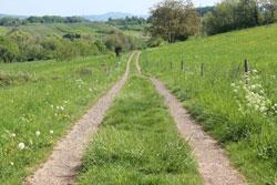 Mittelgebirgslandschaft mit einem zweispurigen Feldweg und beiderseitig blütenreichem Saum sowie einem zentralen Grünstreifen.