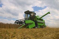 Ein grüner Mähdrescher erntet Getreide.