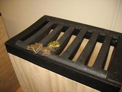 In einer Experimentalumgebung sitzen drei Frösche auf dem Rand eines Gullys, aus dem sie gerade herausgeklettert sind.