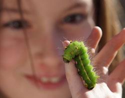 Eine große grüne Raupe klettert an einem Kinderfinger herum und wird von hinten von einem Kind (unscharf im Hintergrund) beobachtet.