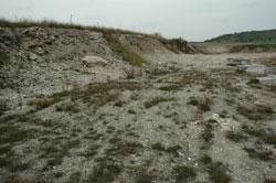 Boden einer Gips-Abbausohle mit initialem Pflanzenbewuchs, umgrenzt von einer etwa 3 m hohen Geländekante.