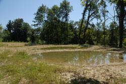 An einem Laubwald-Waldrand liegen drei nahezu runde, flache Gewässer mit klarem Wasser. Noch überwiegt offener Boden im Umfeld der frisch ange-legten Kleingewässer.