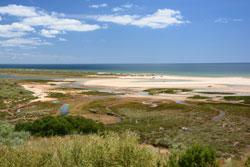 Sandstrand in Portugal mit üppigem Bewuchs im Vordergrund und Meer und Horizont im Hintergrund.