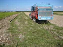 Ein an einem Trecker angehängter Ladewagen lädt gleichmäßig Mahdgut einer artenreichen Erntefläche auf einer Restitutionsfläche im Norden Münchens ab.