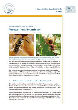 Titelbild der LfU-Broschüre Wespen und Hornissen mit einer Hornisse und einer Wespe.