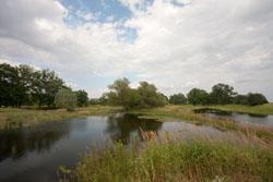 Im Vordergrund ist ein Schilfbestand zu sehen, daran anschließend eine überflutete Fläche der Aue mit Verlandungsbereichen, im Hintergrund kleinere Weichholzbestände.