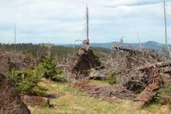 Umgeworfene Fichtenbaumstämme liegen kreuz und quer in einem Windwurf.
