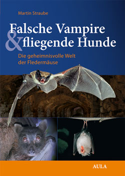 Titelbild des Buches mit drei verschieden großen Bildern von fliegenden und ruhenden Fledermäusen