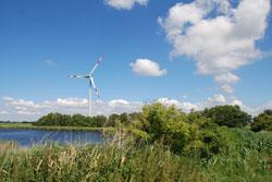 Im Vordergrund ist ein Teich zu sehen, der von einem Schilfgürtel und Hecken gesäumt ist. Im Hintergrund ist eine Windenergieanlage zu sehen.