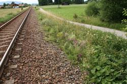 Aufnahme eines Blühstreifens entlang einer Bahnschiene mit Feldgehölzen im Hintergrund.