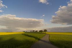 Zwischen grünen Feldern verläuft ein Weg, im Hintergrund sind leuchtend gelbe Rapsfelder zu sehen, den Weg säumen einzelne Bäume. Über den blauen Himmel ziehen Wolken hinweg und werfen Schatten auf die Felder.