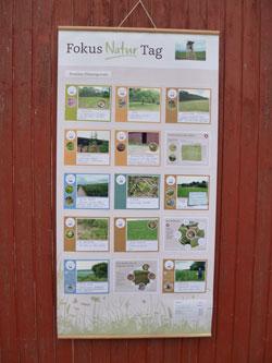 Auf einem Rollplakat sind Bilder und Texte zusammengefasst, auf denen Maßnahmen für den Naturschutz gesammelt sind. Überschrieben ist das Plakat mit Fokus Natur Tag.