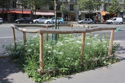 Eine Grüninsel auf einer asphaltierten Straße. Ein Holzzaun umrandet die Fläche.