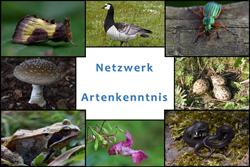 Eine Bildkollage zeigt verschiedene Arten von Flora und Fauna rund um den Schriftzug Netzwerk Artenkenntnis in der Mitte.
