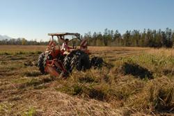 Ein Mann mäht mit einem Traktor das hohe Gras. Im Hintergrund sind Bäume und Berge zu sehen.