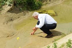 Ein Mann kniet am Rande eines künstlich angelegten Stillgewässers mit sandigem Untergrund und spärlicher Vegetation. Er sammelt Kaulquappen in eine Plastikschale.