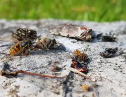 Viele verschiedene tote Insekten liegen auf einem Stein.