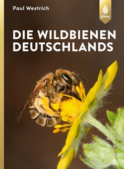 Großaufnahme einer Wildbiene, die auf einer gelben Blüte sitzt.