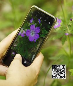 Das Bild zeigt ein Smartphone beim Fotografieren einer Blume sowie einen QR-Code.