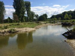 Kleines, flaches Nebengewässer der Isar mit unbefestigten Ufern, am Rand liegt Totholz.